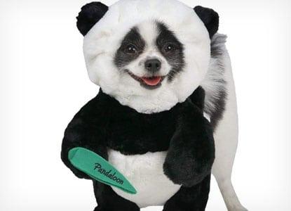 Pandaloon Panda Dog Costume Set